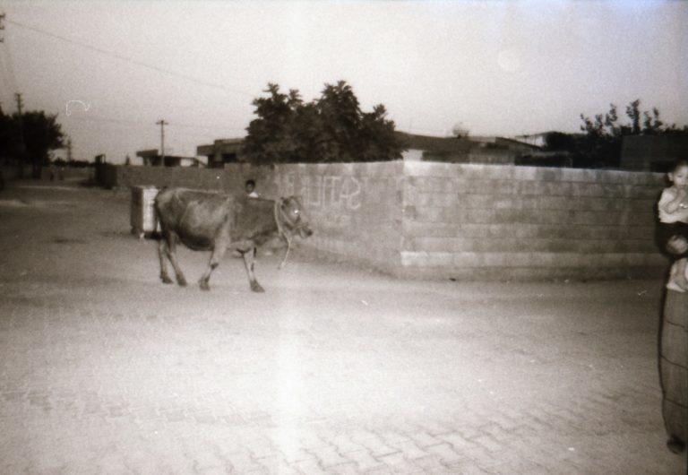 Zeynep (12)